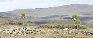 Sanetti plateau