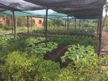 ZWS - gardens